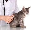 Ветеринарные клиники в Коврове